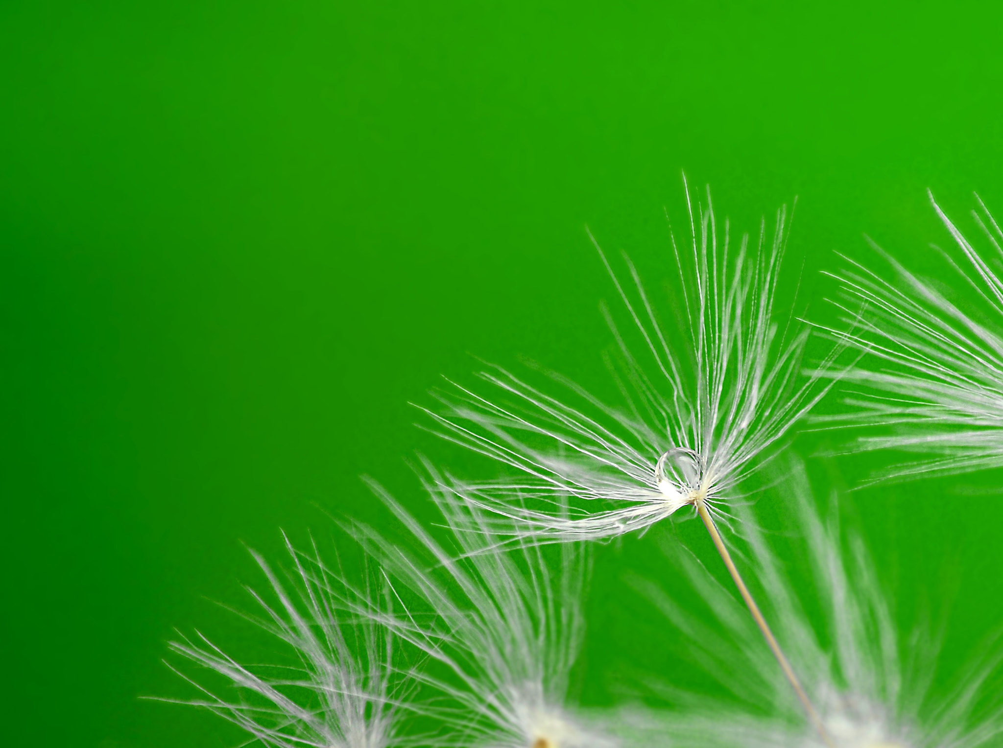 Photograph Verde - Green by Ana MD on 500px