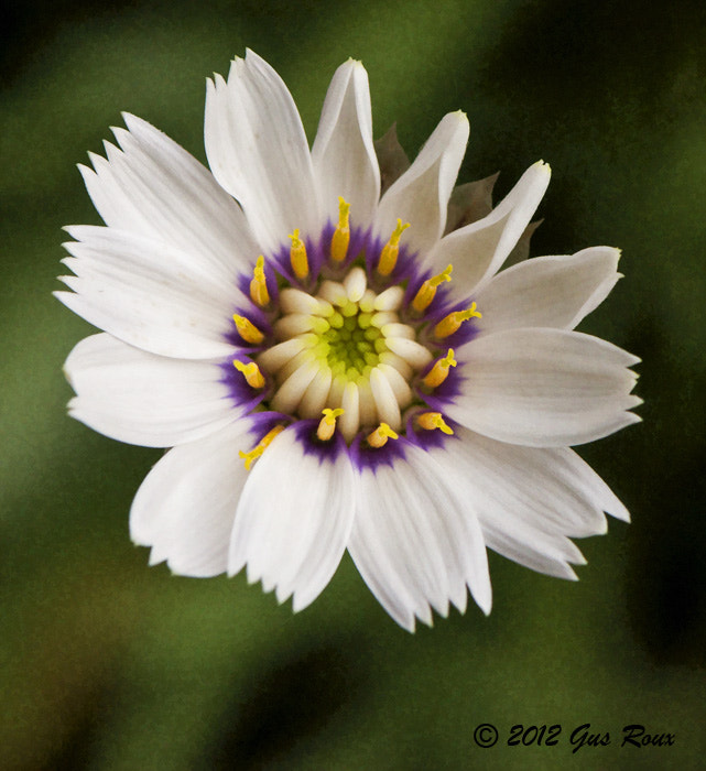 Photograph Small Flower by G.L. Roux on 500px