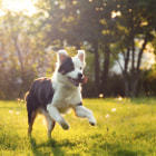 ������, ������: Furry happiness