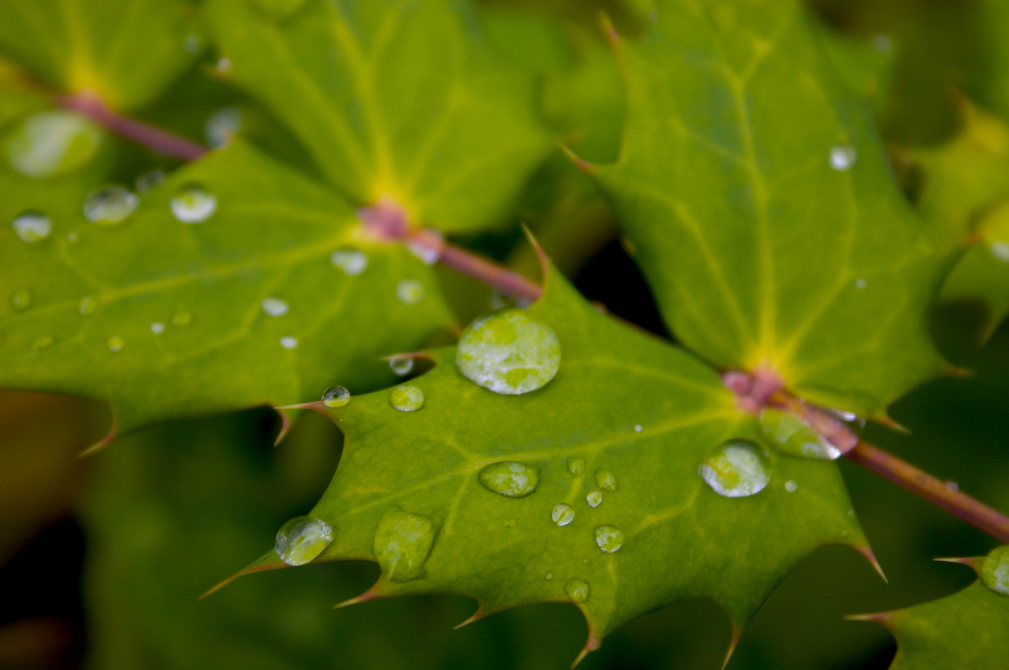 Photograph Droplets by Jeff Nouwen on 500px