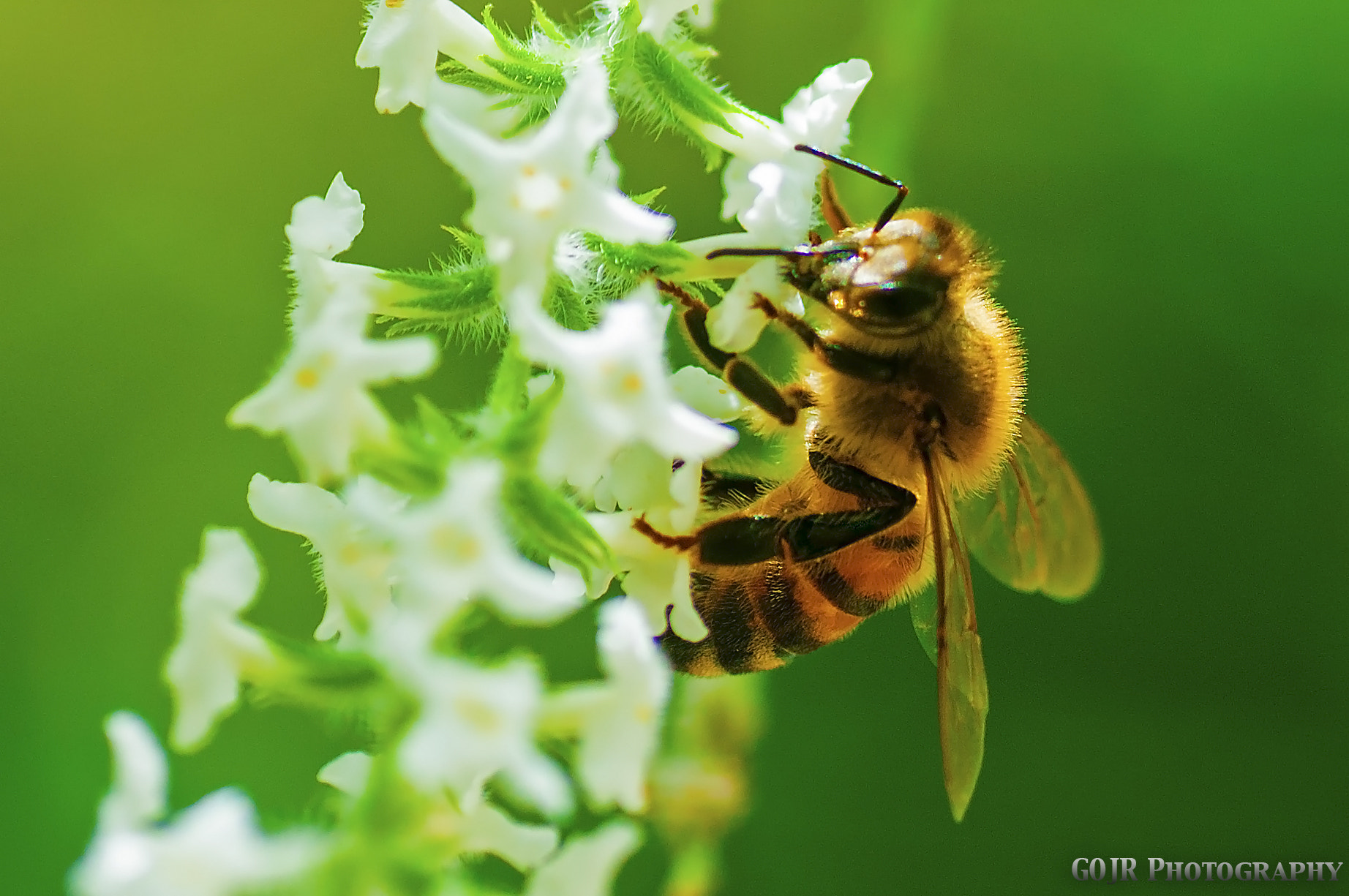 Photograph Bee by Gil Ortiz Jr. on 500px