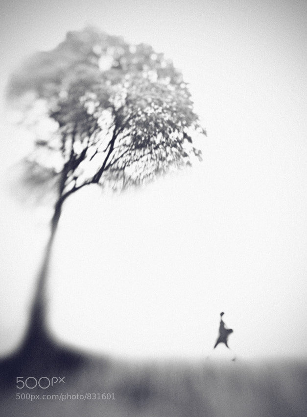 Photograph Morning Song by Hengki Lee on 500px
