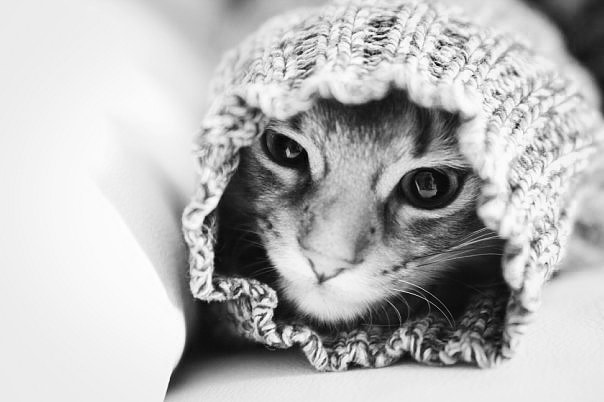 Photograph Woolen Cat by Viktoria Garvare on 500px