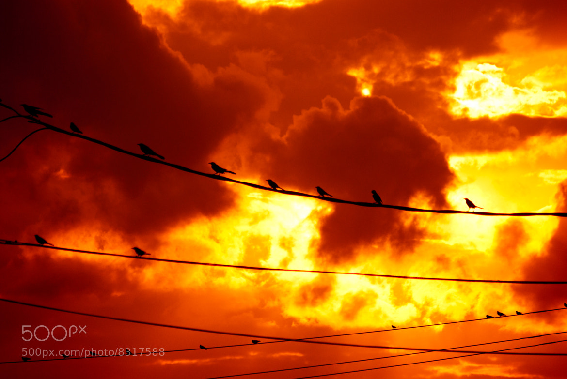 Photograph Birds on a Wire by Grady Richardson on 500px