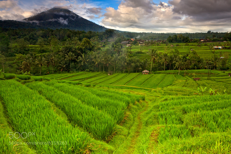 Photograph Jatih Luwih Rice Terrace by Helminadia Ranford on 500px