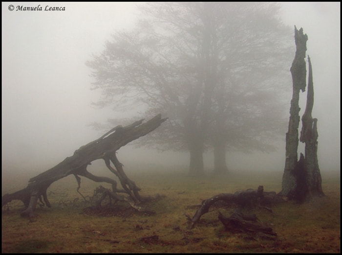 Photograph Trees in fog by Manuela Humelnicu on 500px