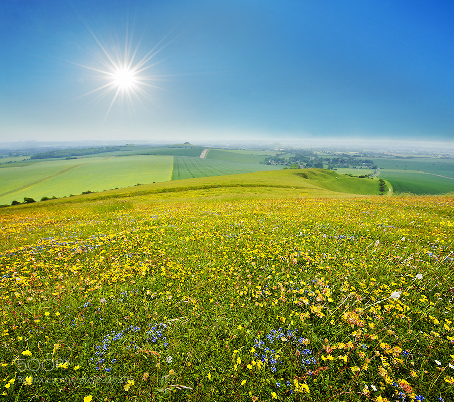 Photograph Wild flower by skyearth skyice on 500px