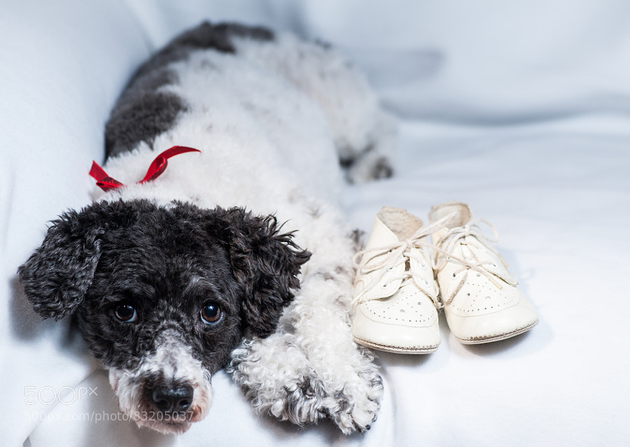 Photograph Kiwi with My Baby Shoes by Jay Scott on 500px