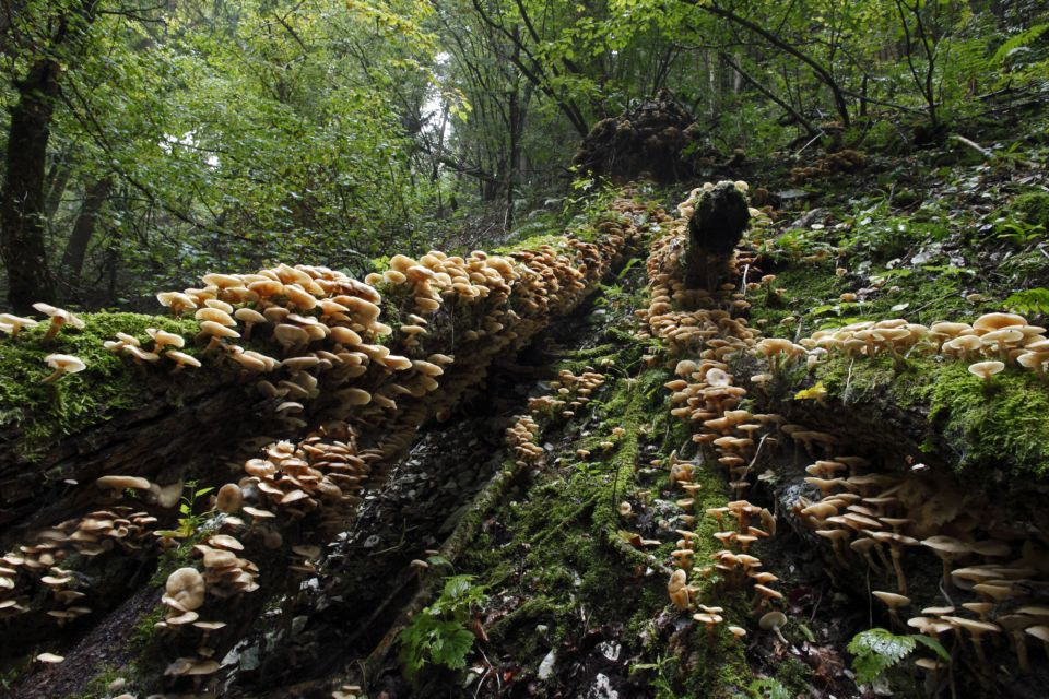 Photograph Funghi by Silvano Fabris on 500px