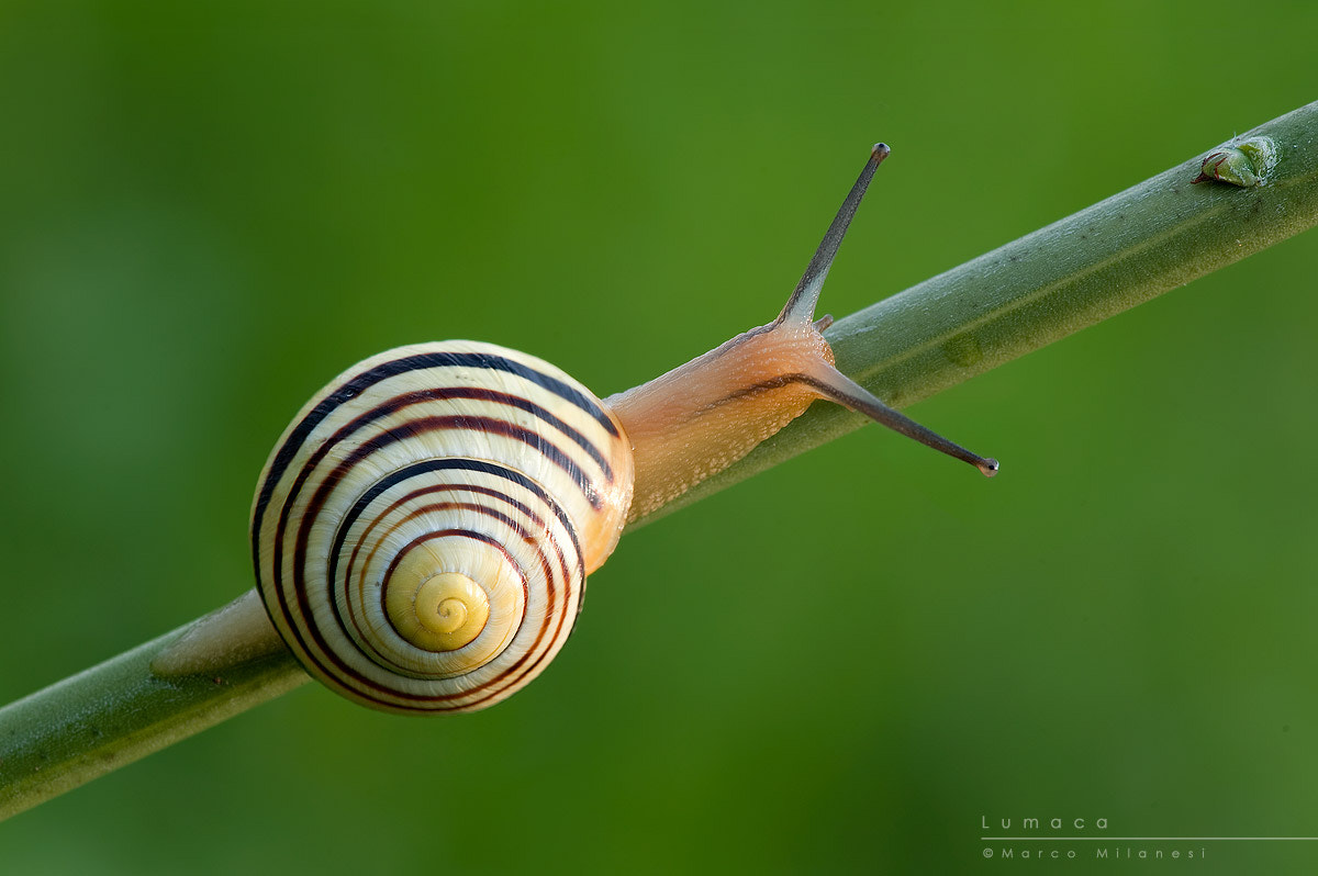 Photograph The Fibonacci sequence by Marco Milanesi on 500px