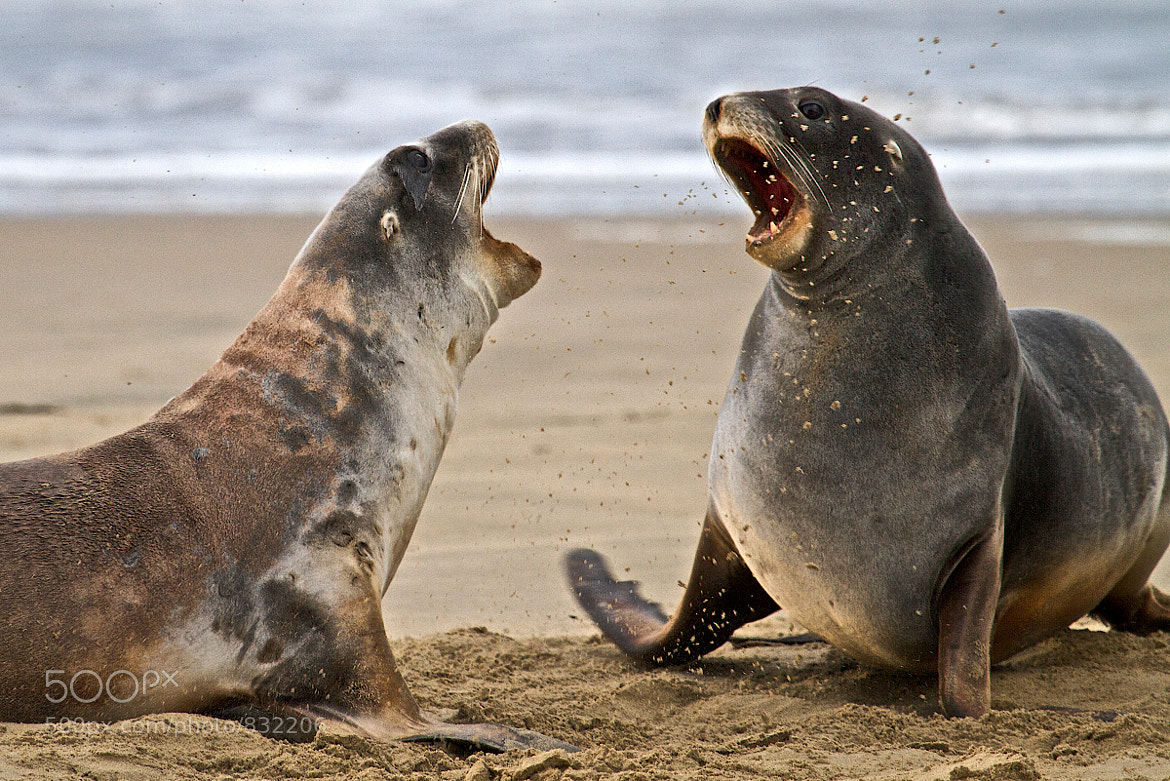 Photograph Playfight by Craig Bullock on 500px