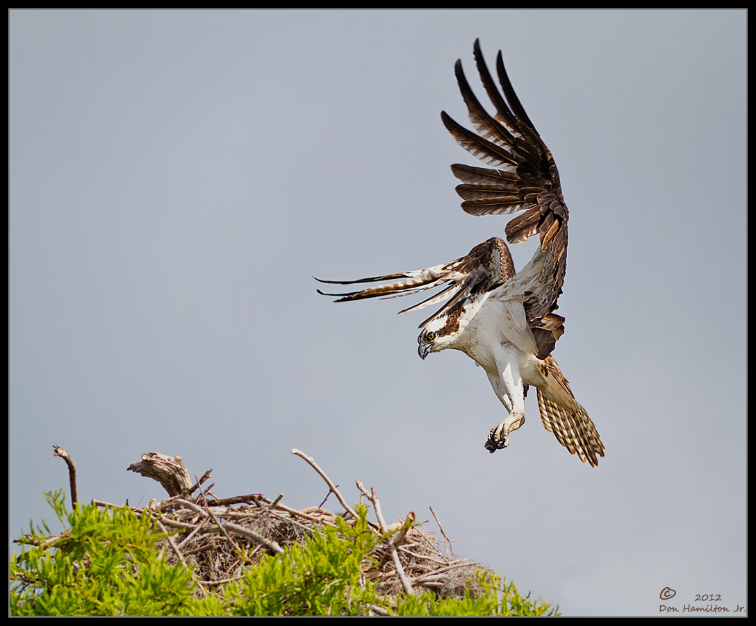 Photograph Another Landing by Don  Hamilton Jr. on 500px
