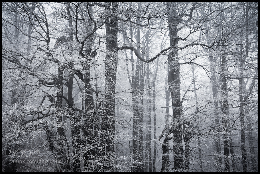 Photograph forest by Zsolt Andras Szabo on 500px