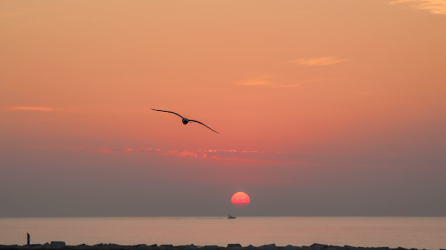 Sunrise bird