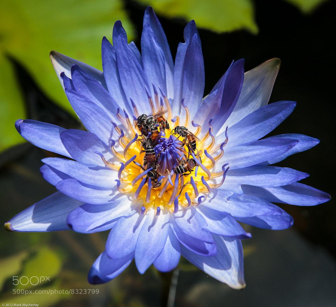 Photograph The bee team by Mark Wycherley on 500px