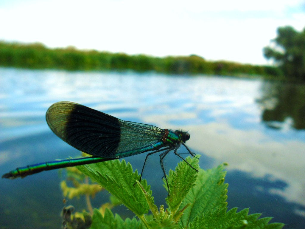 Photograph Mr Dragonfly by Laura Scott on 500px