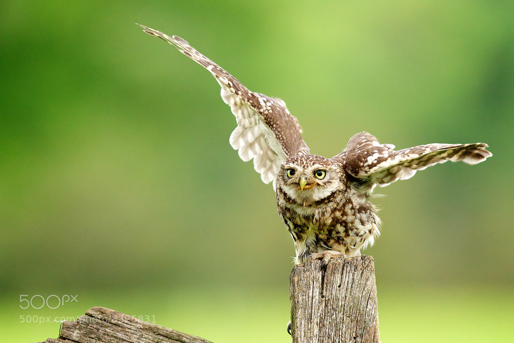 Photograph it was this big! by Mark Bridger on 500px
