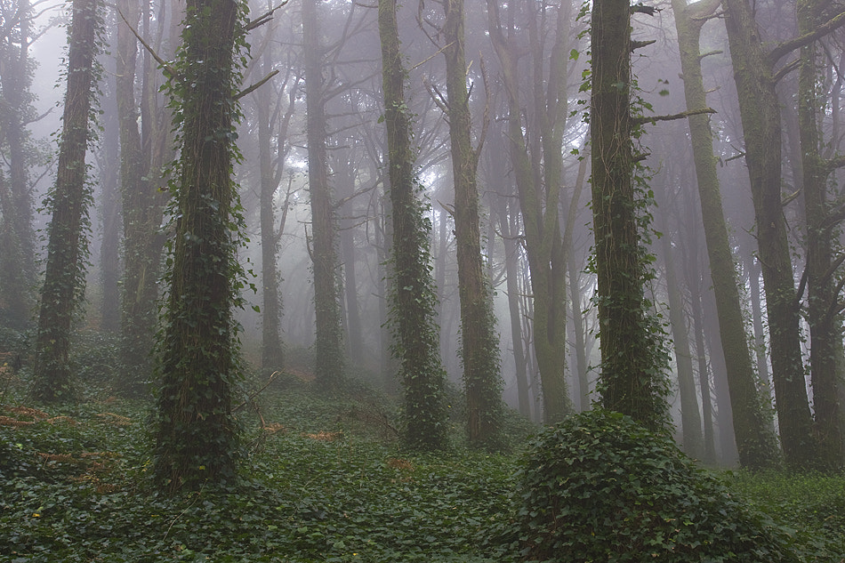 Photograph Land of fairies and vampires by Paulo Rocha on 500px