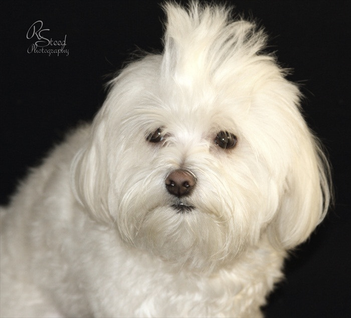 Photograph Bad Hair Day by Rebecca Steed on 500px