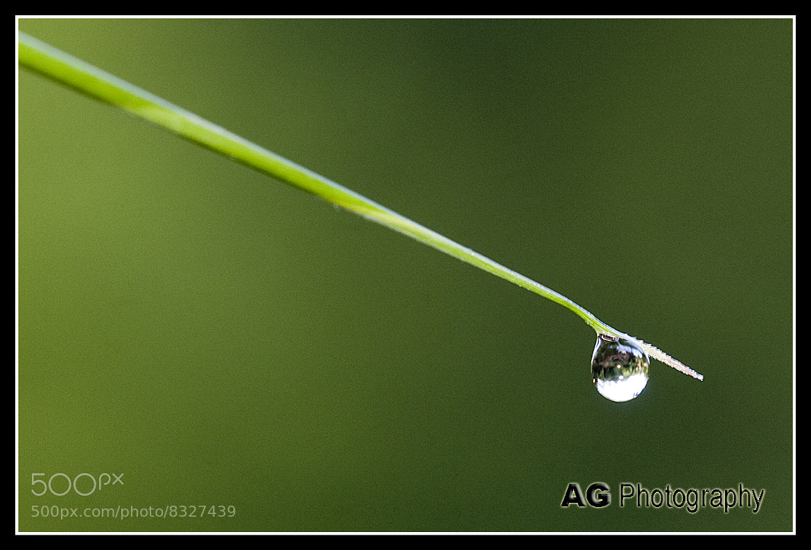 Photograph Dew by Alvin Gay on 500px