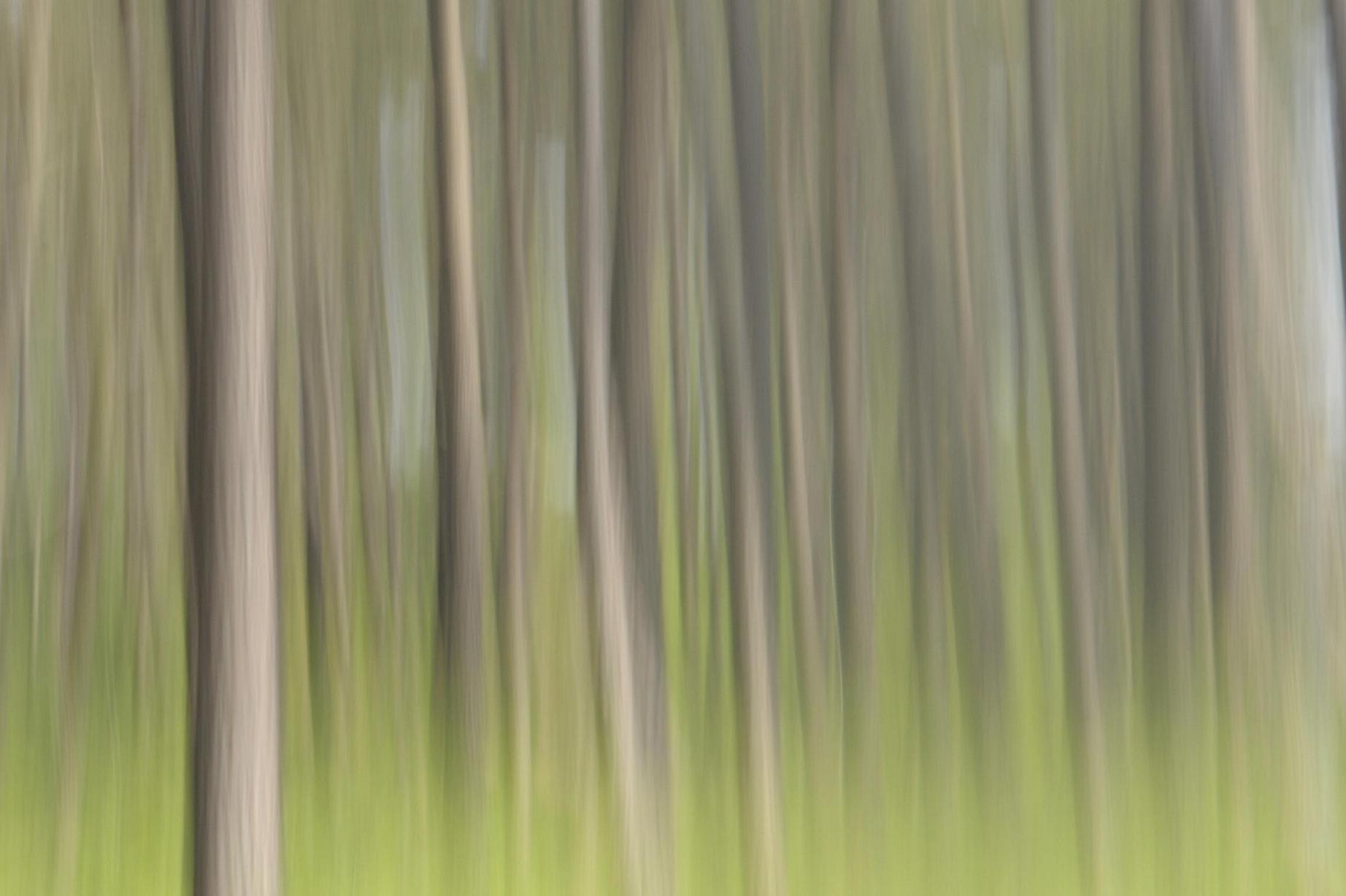 Photograph abstract forest by Laurent Dumas on 500px