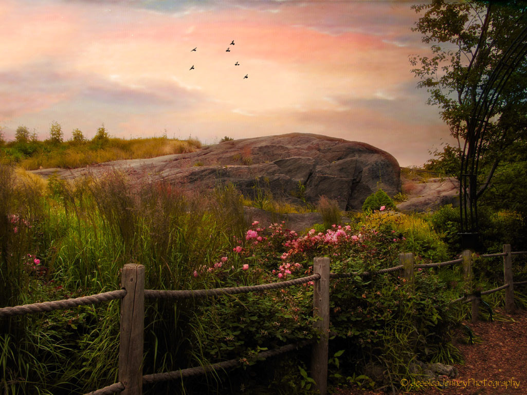 Photograph The Rock Garden by Jessica Jenney on 500px
