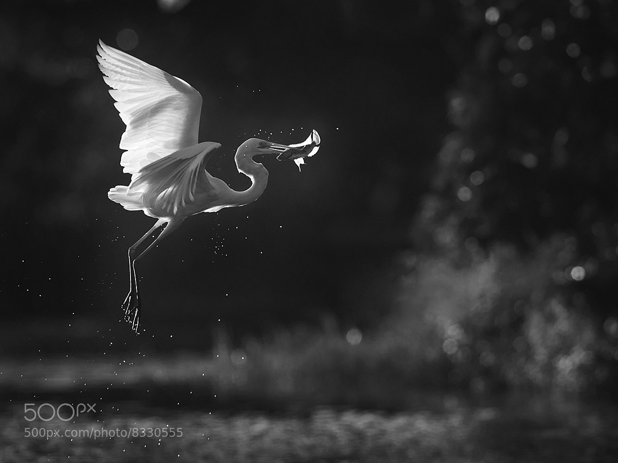 Photograph Morning Catch by Iwan Tirtha on 500px