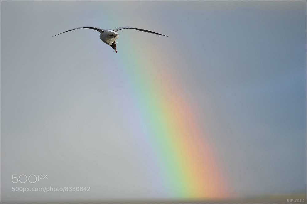 Photograph At the end of the rainbow is a pot of herring :-) by Elmar Weiss on 500px