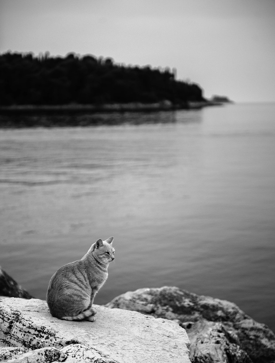 Photograph Fisherman's Cat by Mihail Bidnichenko on 500px