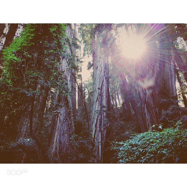 Photograph Flares of Muir Woods. #500northwest #california #travel #vscocam #vsco #forest #sunshine #adventure by Evgeny Tchebotarev on 500px