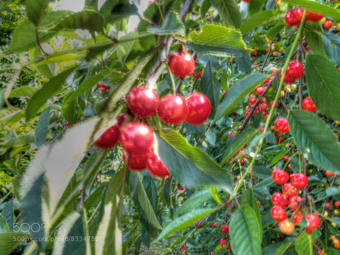 Photograph cherries by Clay Bass on 500px