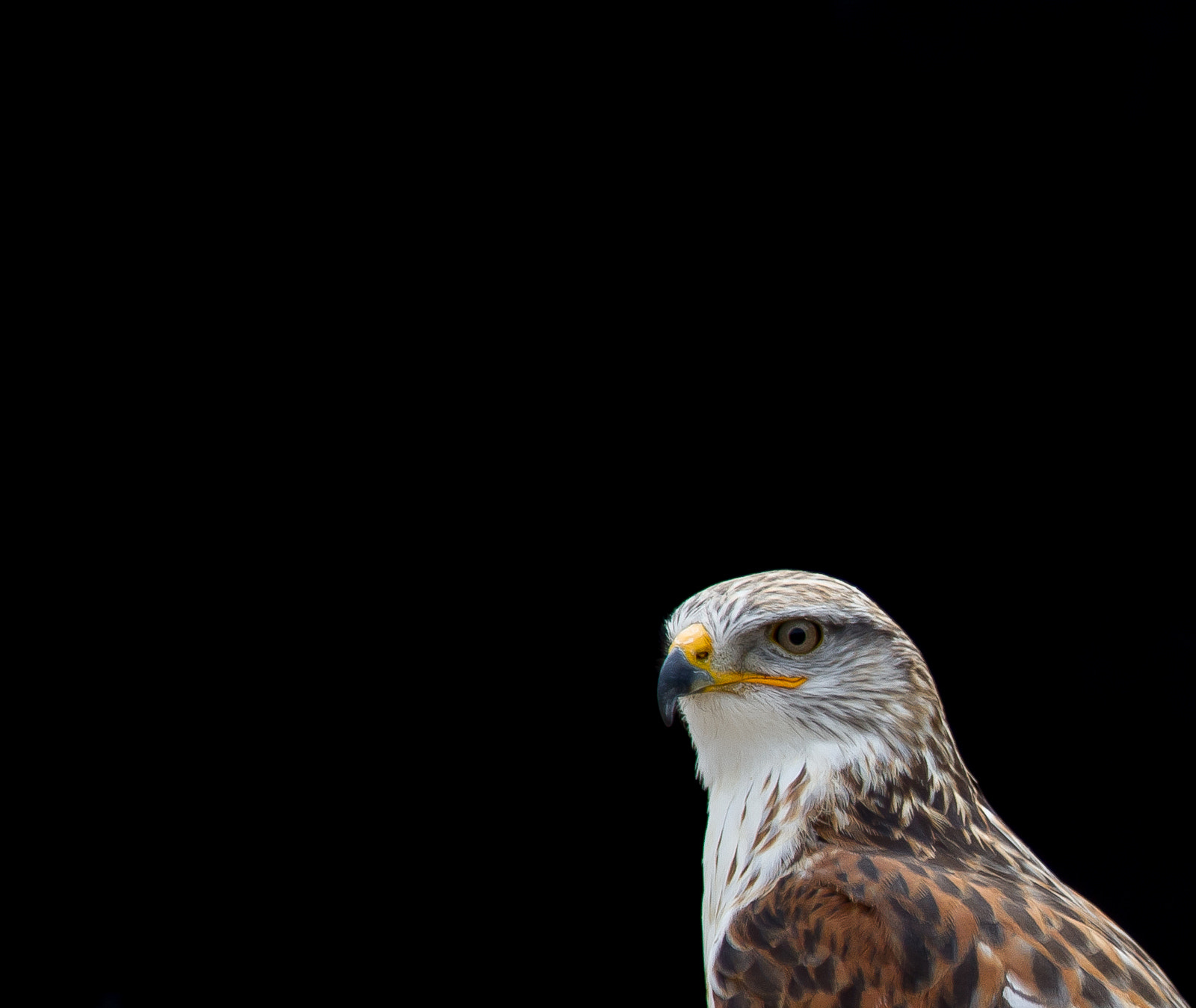 Photograph What's up? by Philipp K on 500px