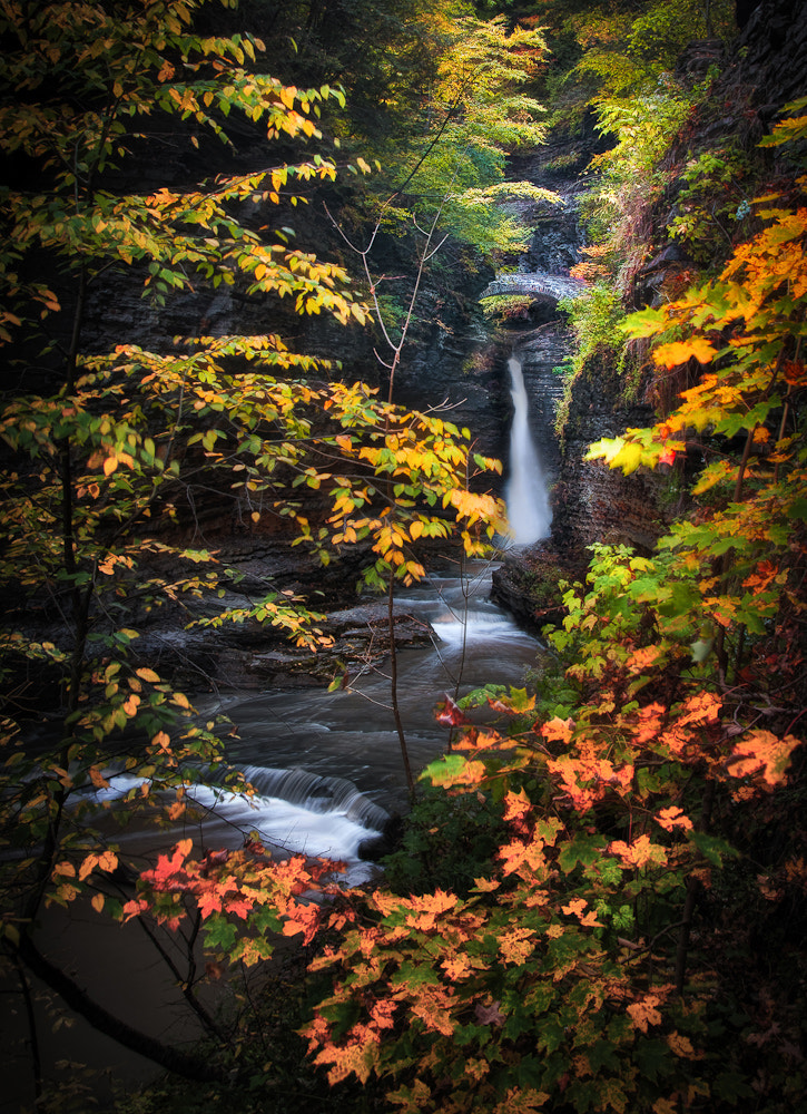 Photograph Surrounded by Fall by Neil Shapiro on 500px