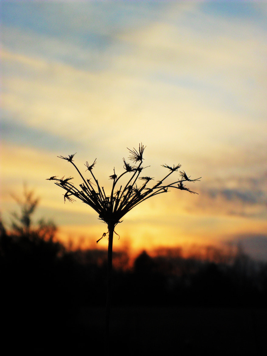 Photograph Sunset Water Plant by Molly Rhodes on 500px