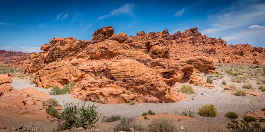 Beehives at the Valley of Fire
