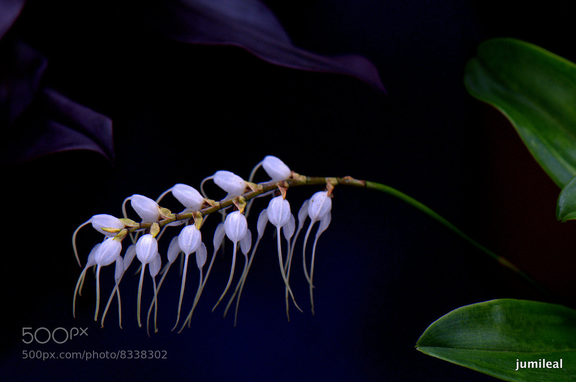 Photograph Orquídeas by JuMiLeAl  on 500px