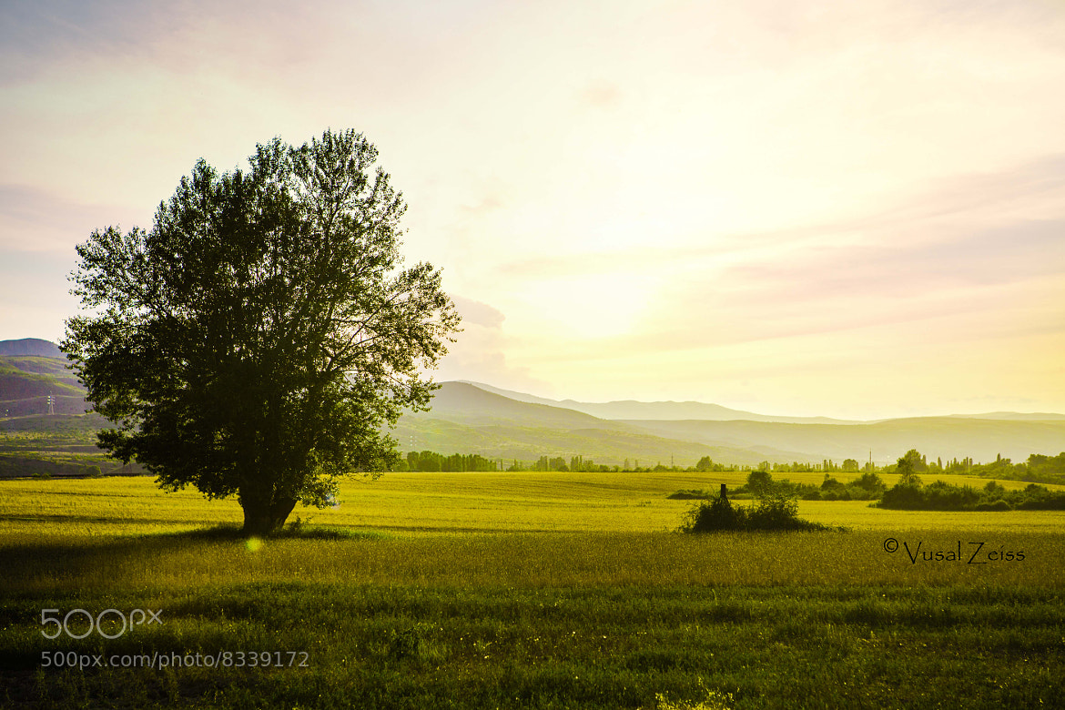 Photograph Tree by Vusal Zeiss on 500px
