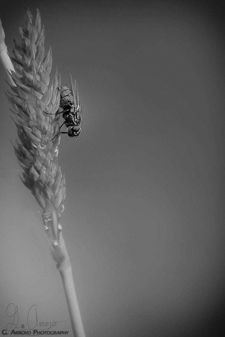Photograph Fly away by Giovanni Arroyo on 500px