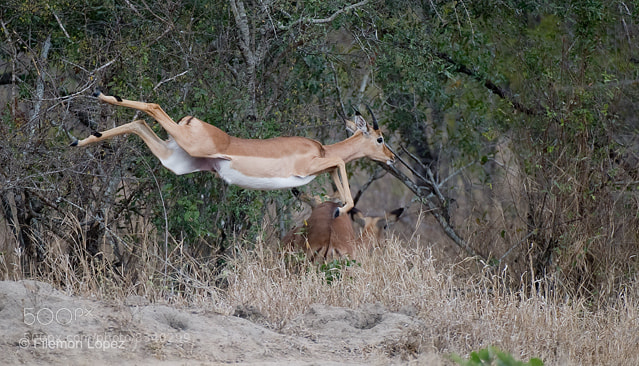 Photograph Jump! by Filemon Lopez on 500px