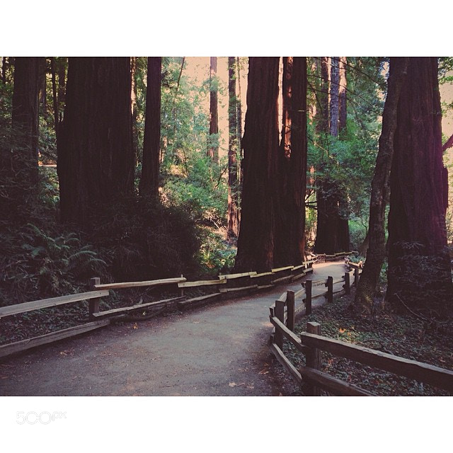 Photograph Day 1: Muir woods #500northwest #adventure #sanfrancisco #sf #nature #forest #vscocam #vsco #filtere by Evgeny Tchebotarev on 500px