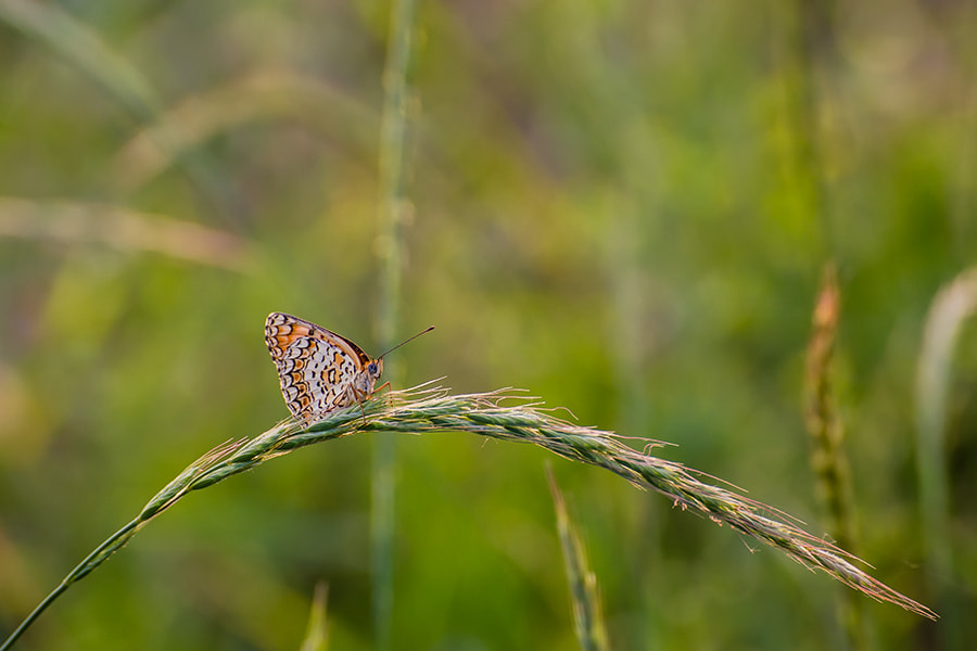 Photograph butterfly by Song Hongxiao on 500px