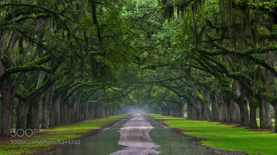 Photograph The Plantation, Wormsloe by Jeff Scozzafava on 500px