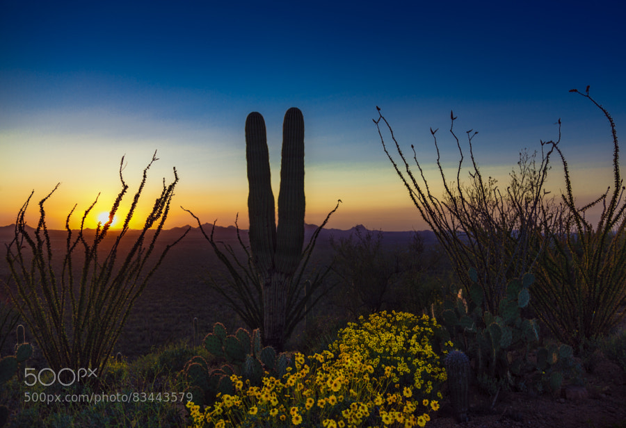 Photograph Peaceful Sonoran Sunset by Pat Kofahl on 500px
