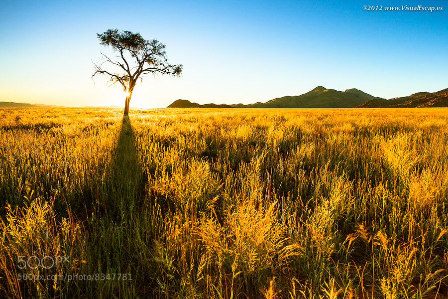 Photograph Golden Grass ~ Namibia by Martin Sojka on 500px