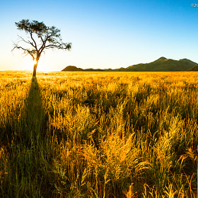Golden Grass ~ Namibia by Martin Sojka (msojka)) on 500px.com