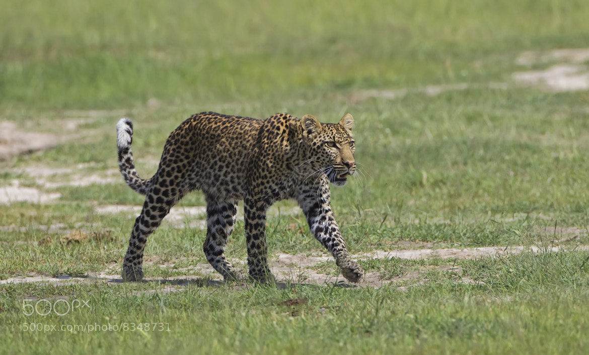 Photograph Just Strolling by Ken Watkins on 500px
