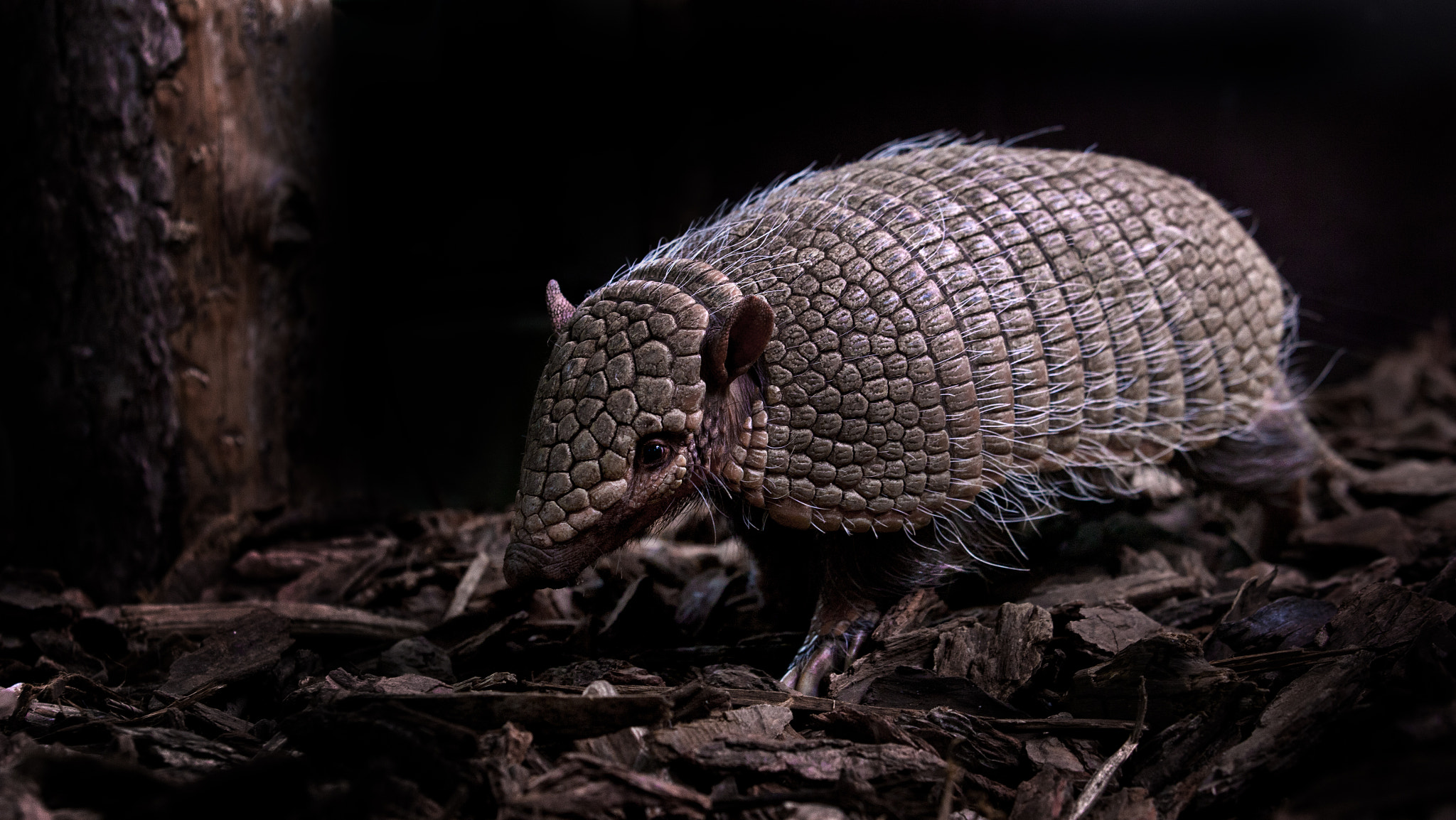 Photograph Armadillos Rule! by Sue Demetriou on 500px