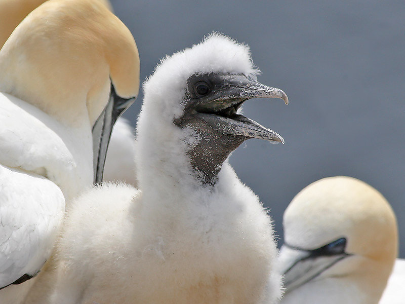 Photograph Beautiful baby - proud parents! by Aat Bender on 500px