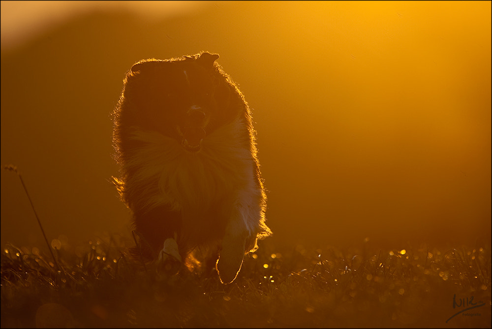 Photograph The last sunray by Nicole Knor on 500px
