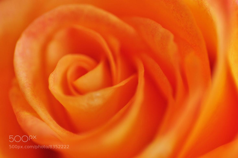 Photograph orange dream by helmut flatscher on 500px